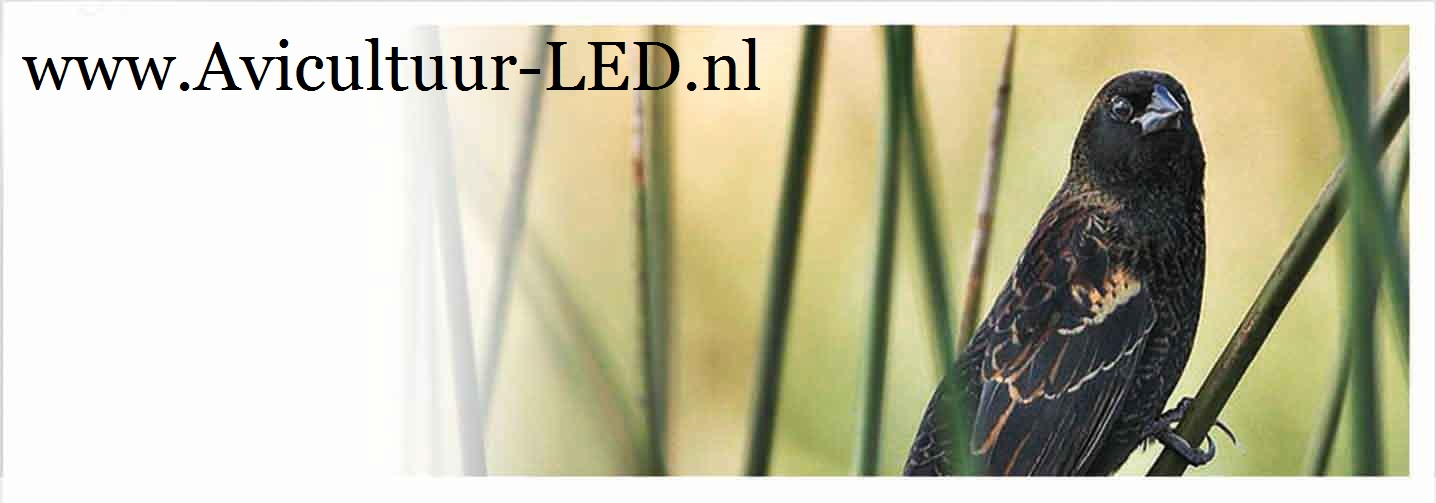 Avicultuur LED